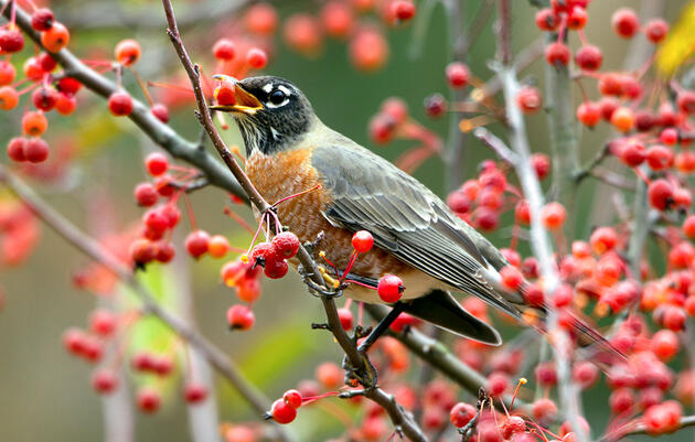 How to Go Birding by Tree