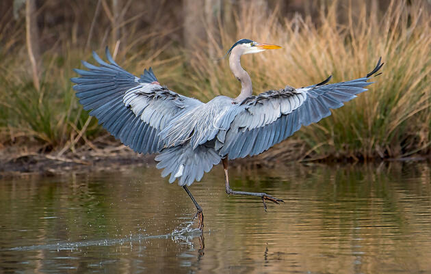 Audubon-Supported Legislation Benefits Birds and Water Rights Holders in Arizona