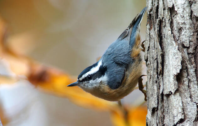 Start Using Spectrograms to 'Read' Bird Songs and Calls