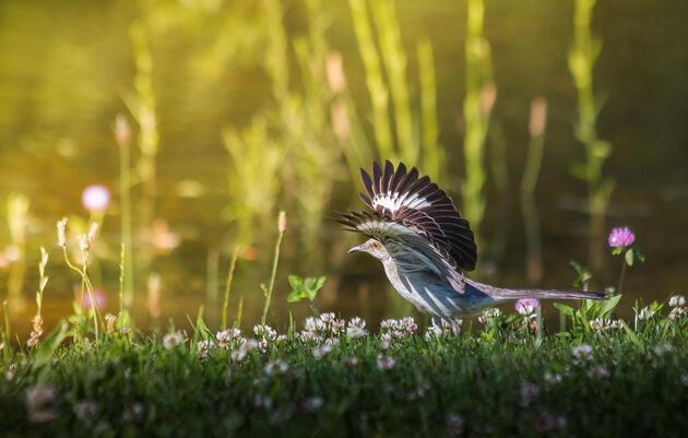 Audubon Arkansas to Become First 100% Renewable Powered Nonprofit in Arkansas