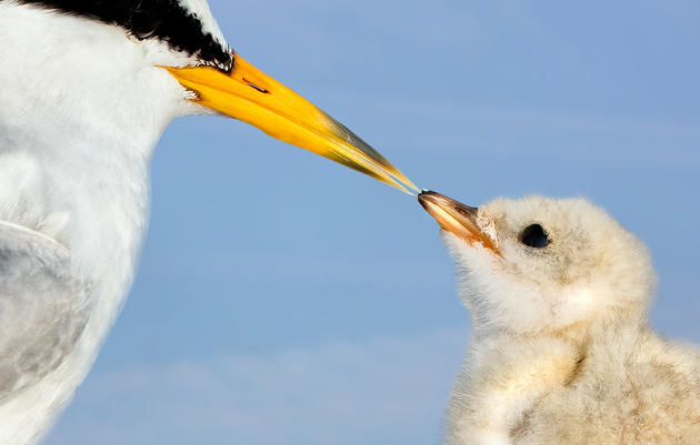 Audubon Mississippi Celebrates Resilience as BP Oil Spill 10-Year Memorial Nears