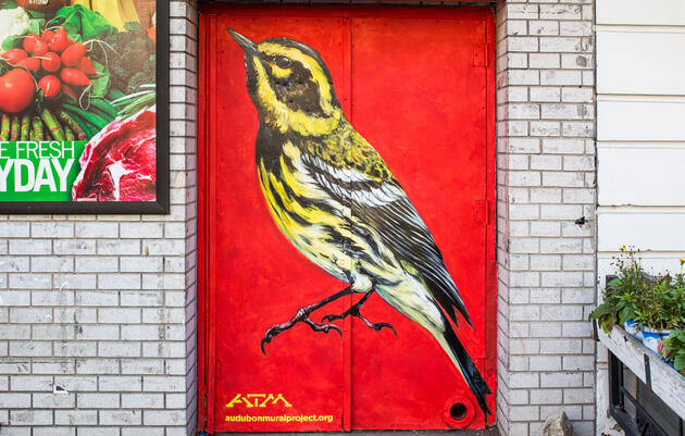 Townsend's Warbler by ATM