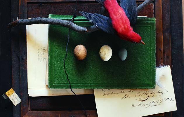 Audubon's Legacy: Where It All Began