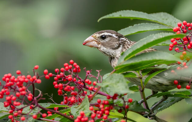 These Fantastic Photos Show Birds Thriving With Native Plants