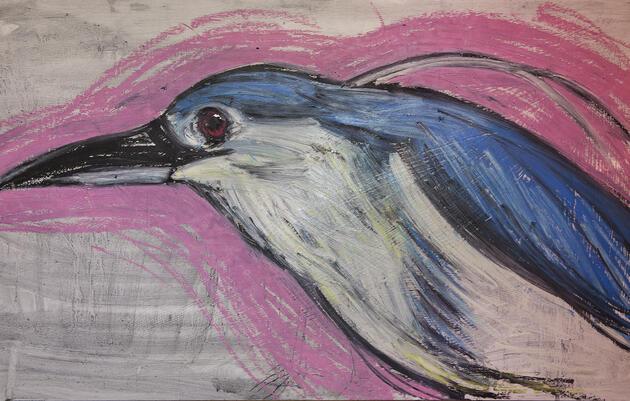 Black-crowned Night-Heron by Esteban Ocampo-Giraldo