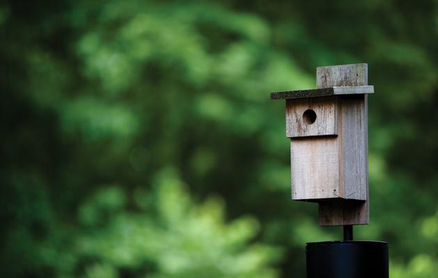 DIY: Build a Bluebird Box