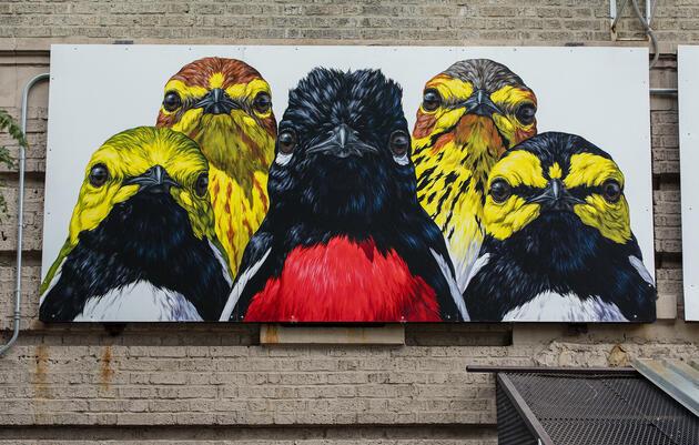 Gang of Warblers by George Boorujy