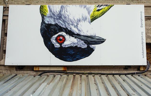 Black-capped Vireo by George Boorujy