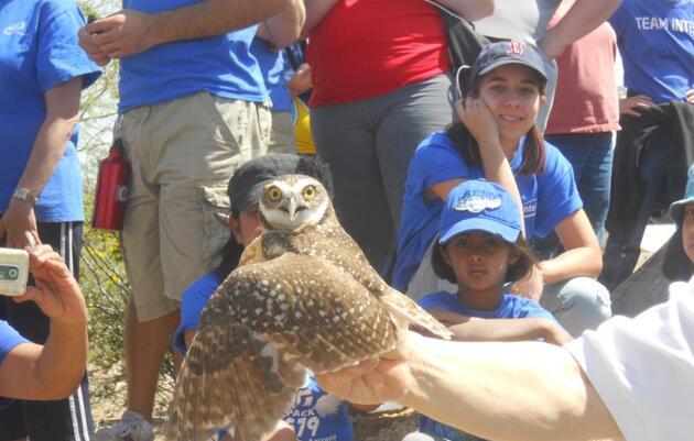 Audubon Arizona welcomes Burrowing Owls to the Rio Salado Habitat