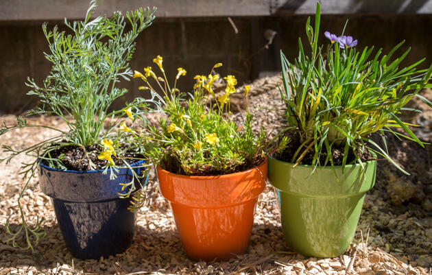 Brighten Up Your Balcony or Patio with a DIY Native-Plant Garden
