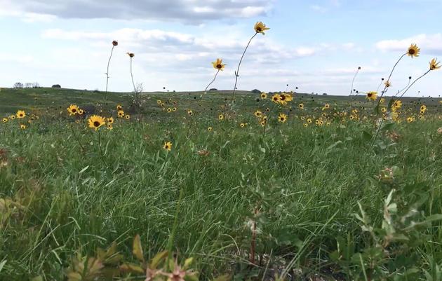 Introducing Audubon's Conservation Ranching Program