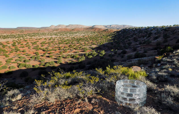 Glistening Glass Sculptures in the Desert Explore Bird Molt and Gender Transition