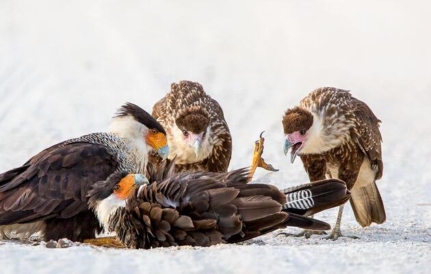 Our Favorite Fascinating Bird Behaviors From the 2020 Audubon Photo Awards