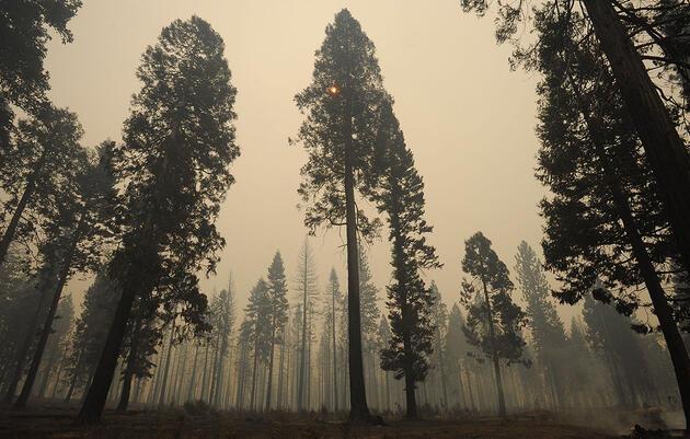 Recent 'Megafires' Imperil Even Fire-Loving Forest Birds