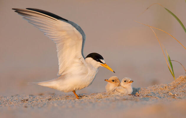 An Early-season Tropical Storm Wiped out Mississippi's Beach-nesting Birds
