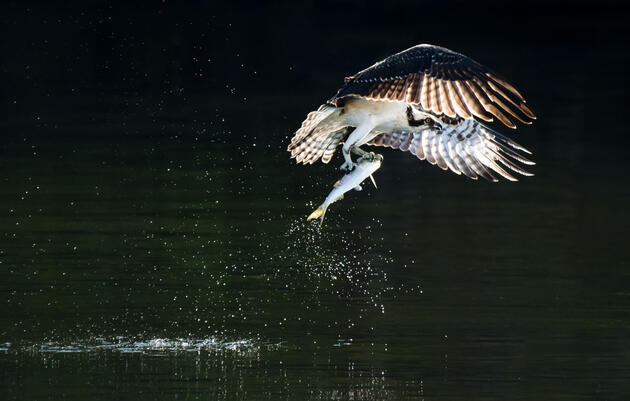 A Big Day for the Little Fish that Seabirds Rely On
