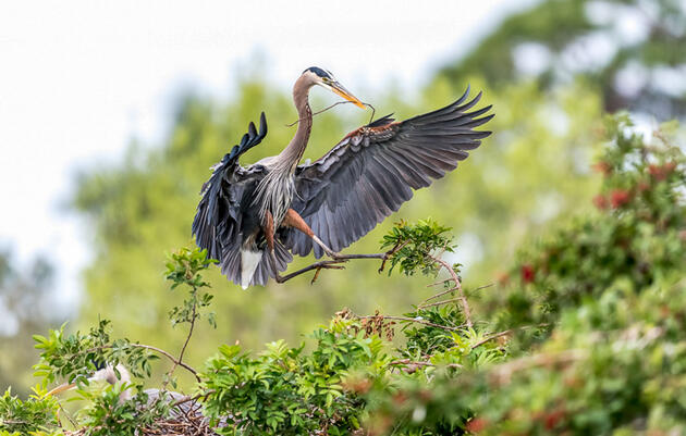 Audubon Analysis: House Spending Bills Address Conservation Needs for Birds, People, and Places