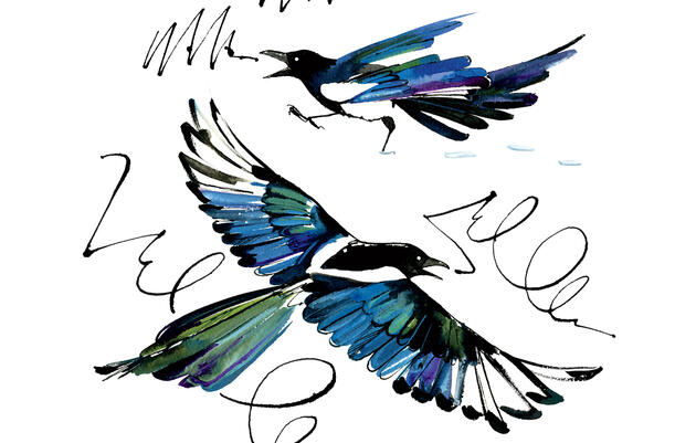 Reimagining the Black-billed Magpie