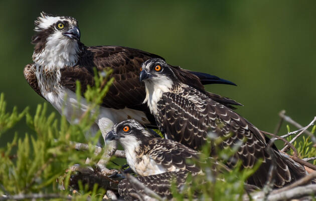 Audubon Prepares Advocates for Upcoming Arizona Legislative Season