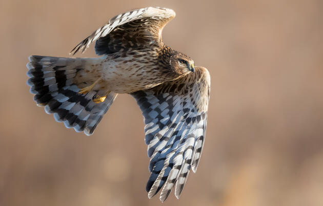 Administration Continues to Defend its Illegal Bird-Killing Policy