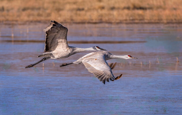 In Driest Year in Half Century, Audubon Releases Water into Rio Grande to Sustain Flows