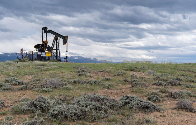 Courts voided leases and otherwise impeded the administration's efforts to lift restrictions on energy development within Greater Sage-Grouse habitat. Evan Barrientos/Audubon