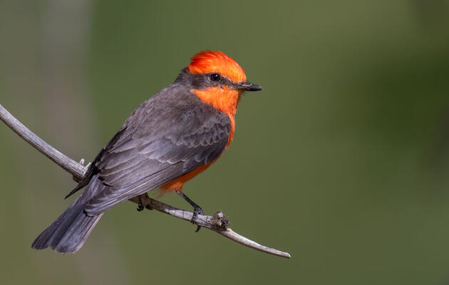 Give to Audubon Society and restore a natural world where birds can thrive
