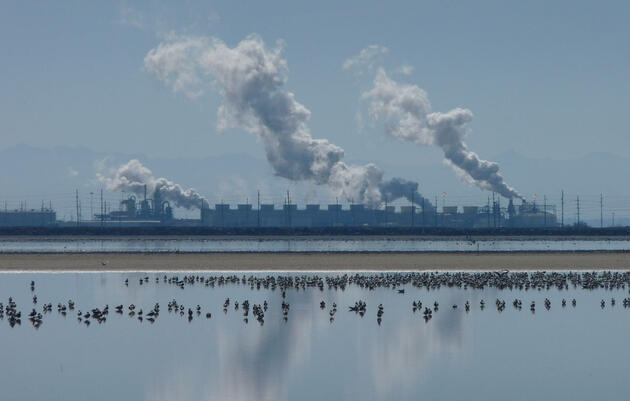 Geothermal Power and Birds