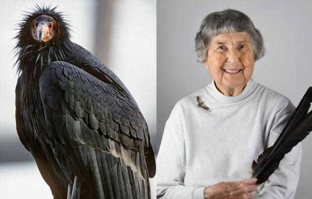 This Bird Lives Because She Never Quit