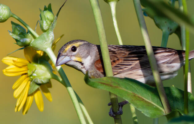 National Audubon Society Announces Largest Market-Based Regenerative Grasslands Partnership in the U.S.