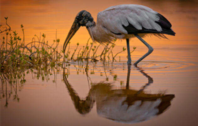 Mississippi's Big Sunflower River Named #3 on 2020 America's Most Endangered List
