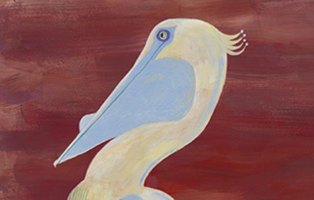Reimagining the American White Pelican