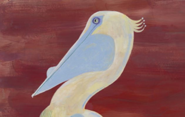 Reimagining the American White Pelican