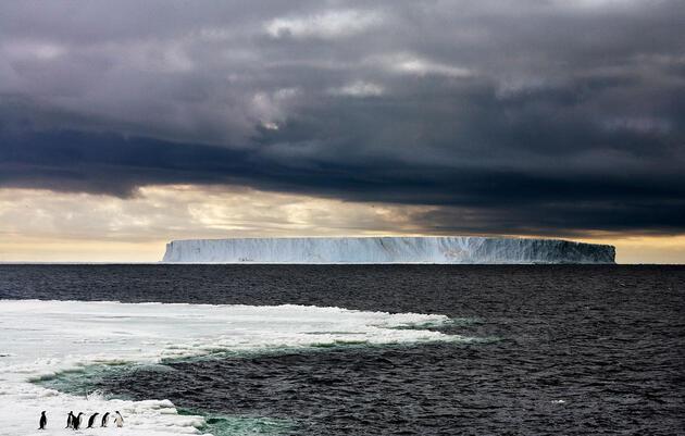Los pingüinos y los osos polares resisten en los polos