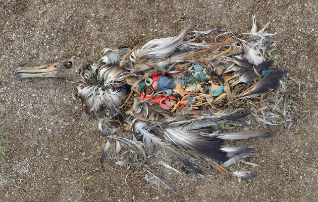 How Much Plastic Is Marooned at Sea?