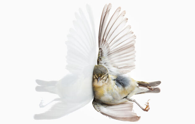 Bird vs. Building: Portraits of Flight Gone Wrong