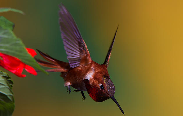 Share the Buzz About Hummingbirds