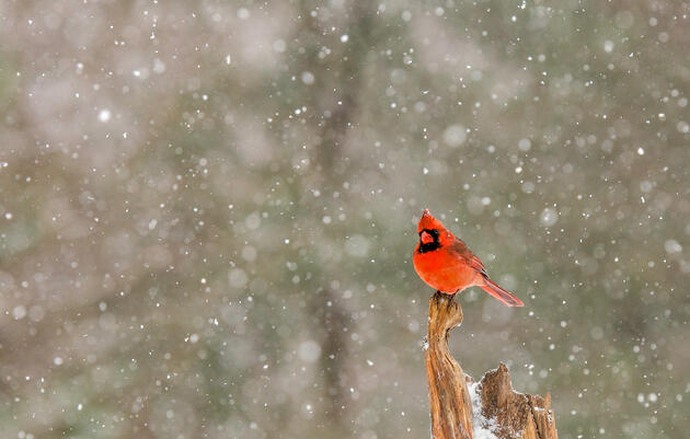 Holiday Birding Traditions, as Told by Our Members