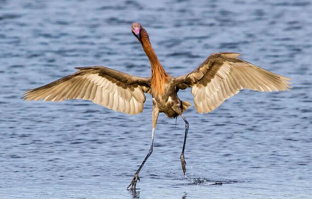 National Audubon Society Announces Comprehensive Gulf Restoration Plan