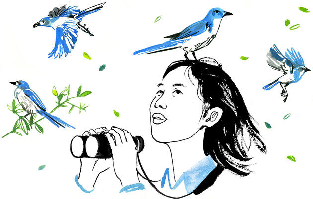 Why Nancy Chen Is Mapping the Family Tree of Florida Scrub-Jays