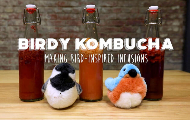 Bird-inspired Kombucha Infusions to Quench Your Thirst