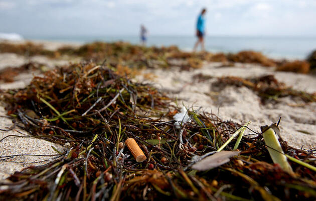 Cigarette Butts Are Everywhere. Is Banning Filters a Viable Solution?
