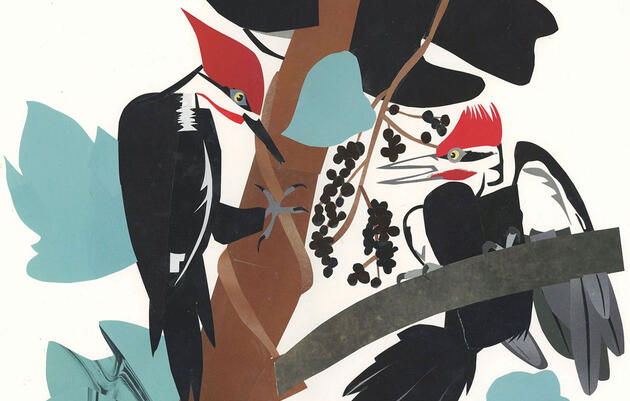 Reinvención del carpintero norteamericano de John James Audubon