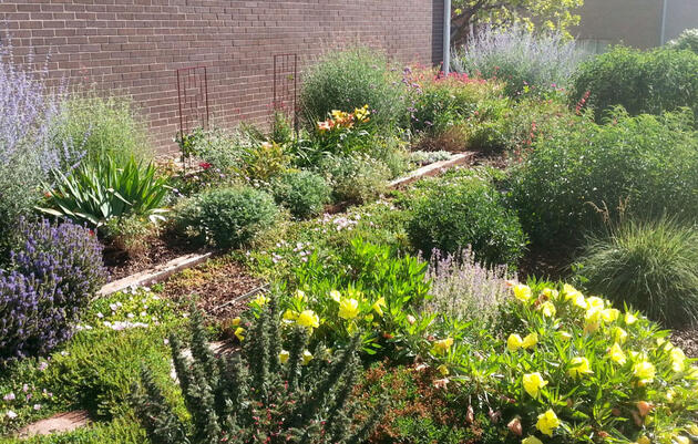 How One Neighborhood Saved Millions of Gallons of Water With Native Plants