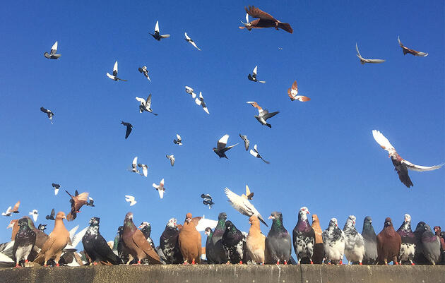Pigeons Are Beautiful, so Start Photographing Them