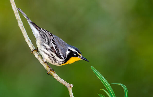Birdist Rule #70: Get Prepared for Spring Migration