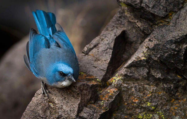 Seven Nifty Jays That Aren't Blue Jays