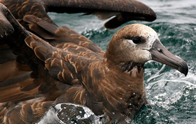 A West Coast Win for Small Fish—and Seabirds, Too
