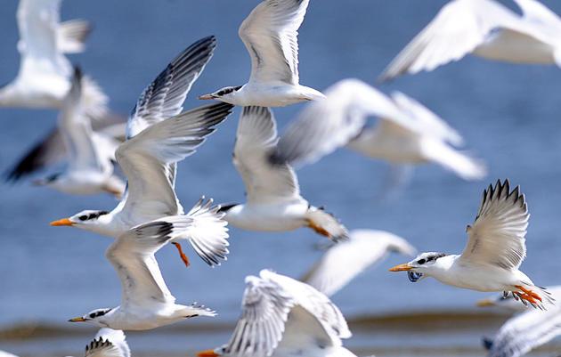 Where Do Seabirds on the East Coast Like to Feast?