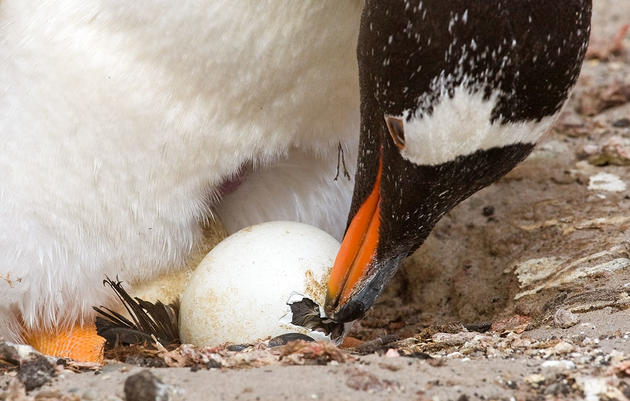 The Art of Hatching an Egg, Explained